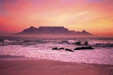 Cape Town rose